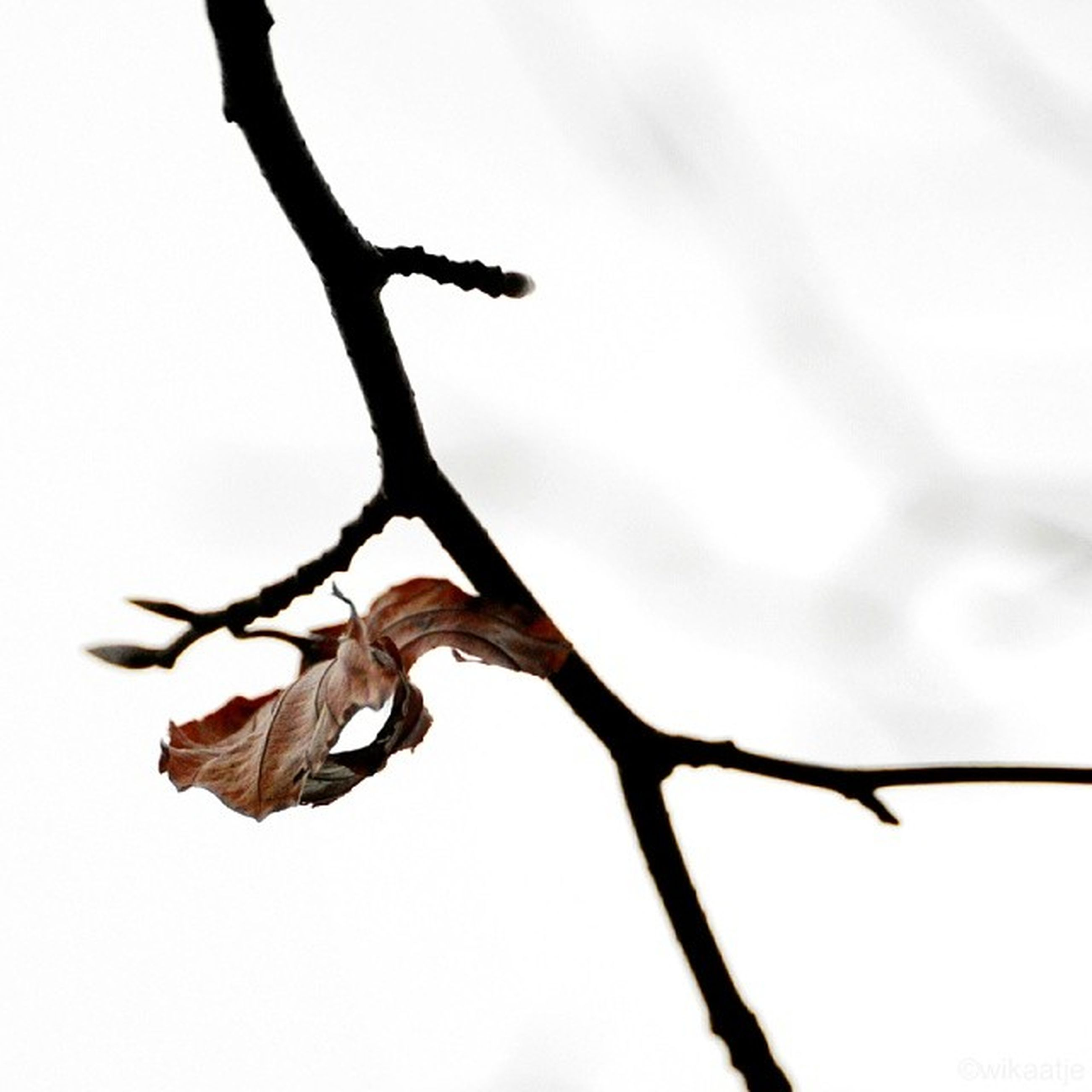 branch, close-up, nature, dry, twig, dead plant, focus on foreground, leaf, tree, clear sky, sky, low angle view, bare tree, stem, no people, outdoors, tranquility, growth, dried plant, day