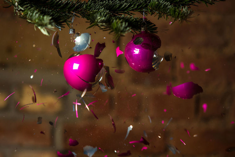 Close-up of bursting christmas bauble hanging on tree at home
