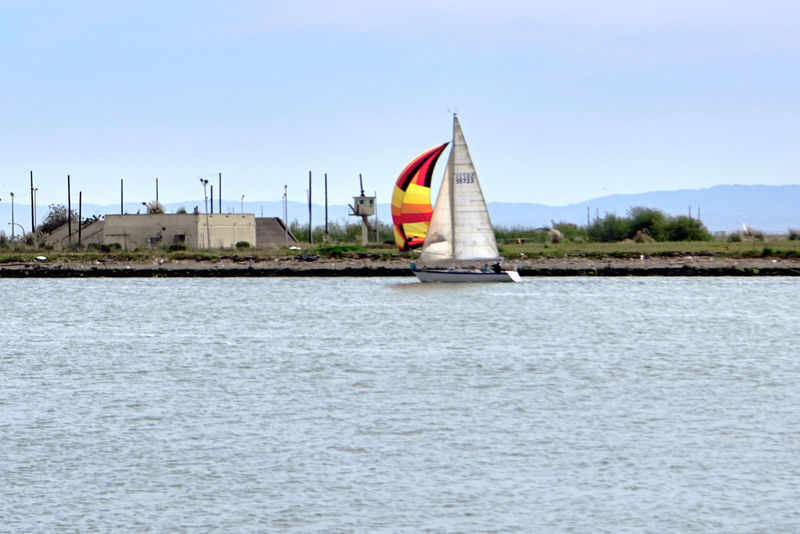 Sailboats At Middle Harbor 3 The Color Of Sport Port Of Oakland, Ca. Sailboats Sailing Sports Colorful Sails Alameda Shoreline Waterfront Harbor Harbor Lookout Channel Estuary Cove Marin Headlands Middle Harbor Lampposts Built Structure Calm Waters People On Board Enjoying Life