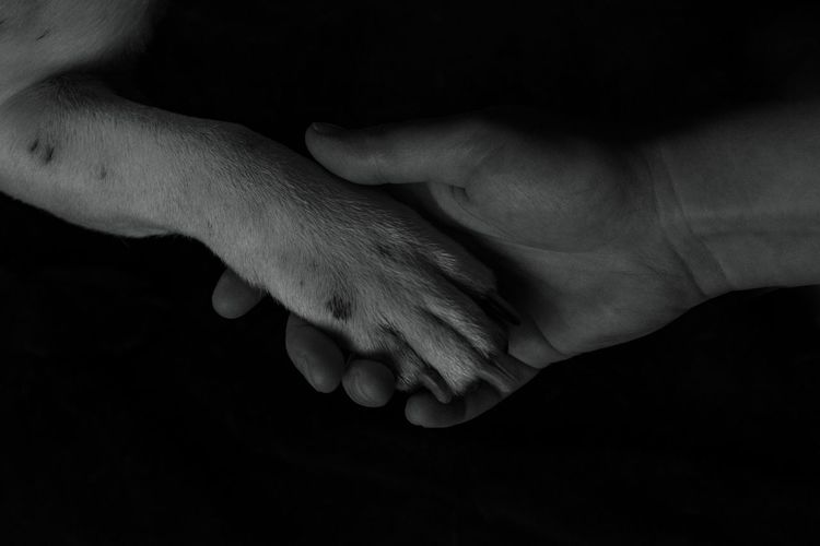Human Hand Human Body Part Black Background Low Key Studio Shot Studio Photography D500 Black Background Dog❤