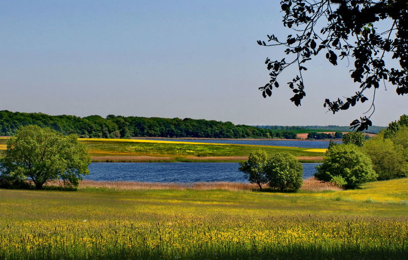 Beauty In Nature Blossom Blue Field Flower France Photos Grass Green Green Color Growth Idyllic Lac De Landre Landscape Nature Non-urban Scene Outdoors Plant Rural Scene Sky Tranquil Scene Tree Yellow