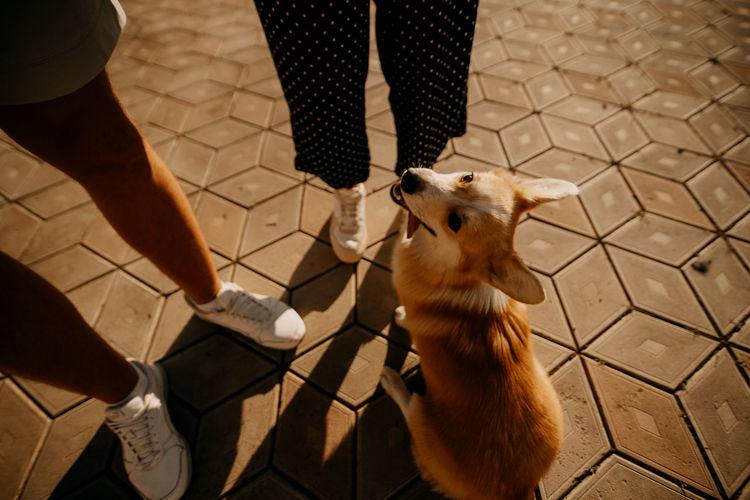 Fun family with dog corgi