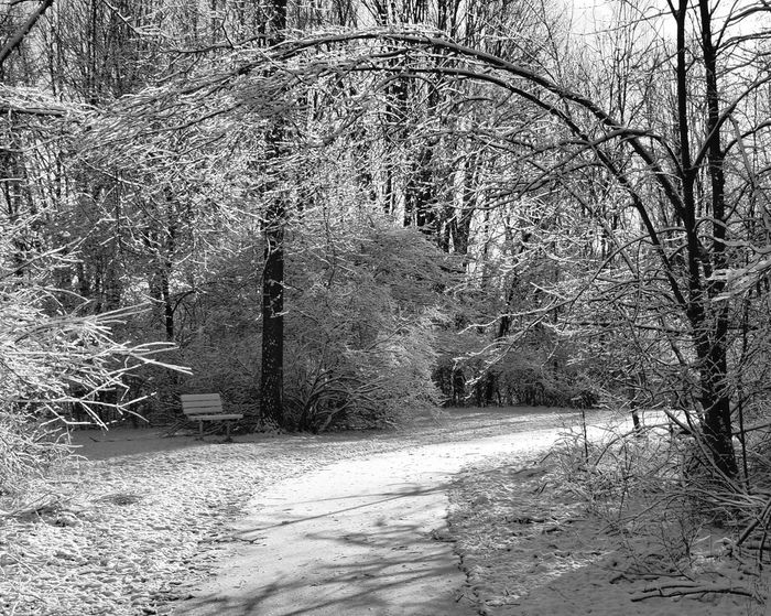 Black And White Snow Woods Nature