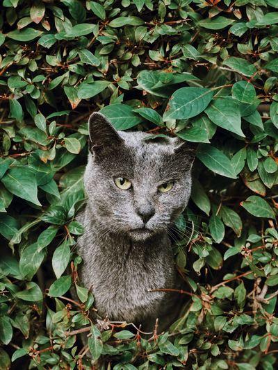 🌿 מייחתול מייאייפון10 IPhoneX ShotOnIphone Plant Part Leaf One Animal Mammal Green Color Portrait Looking At Camera
