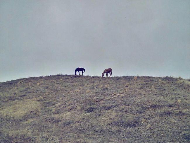 Capadocia Treveling Blackberrypassport Blackberryphoto Landscape Trevel Horses