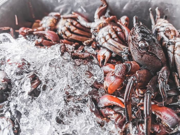 High angle view of crabs for sale in market
