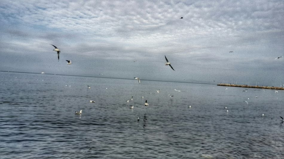 Walking Around Birds Birds_collection EyeEm Best Shots Martilar Deniz Sea And Sky Hello World EyeEm Good Morning