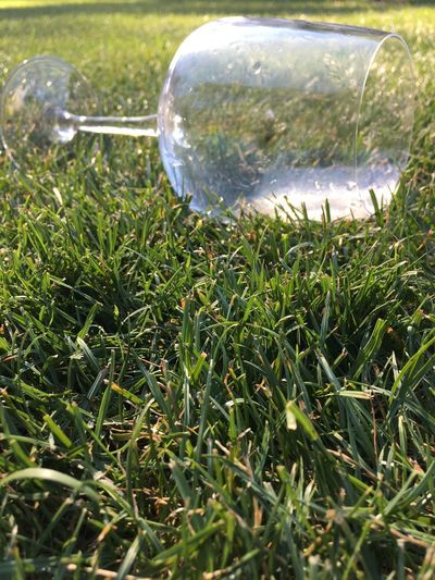End of party Like Party Wedding End Of The Day Wine Glass Of Wine Drinking Drink Green Grass Glass Hello Hello World EyeEmNewHere EyeEm EyeEm Best Shots Plant Grass Green Color Nature Field Growth No People Day Land Outdoors Reflection Tranquility Blade Of Grass Transparent