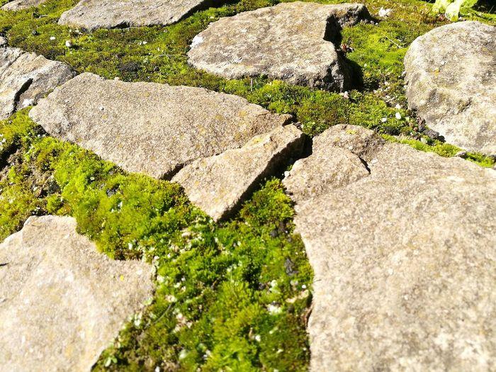 Moss between