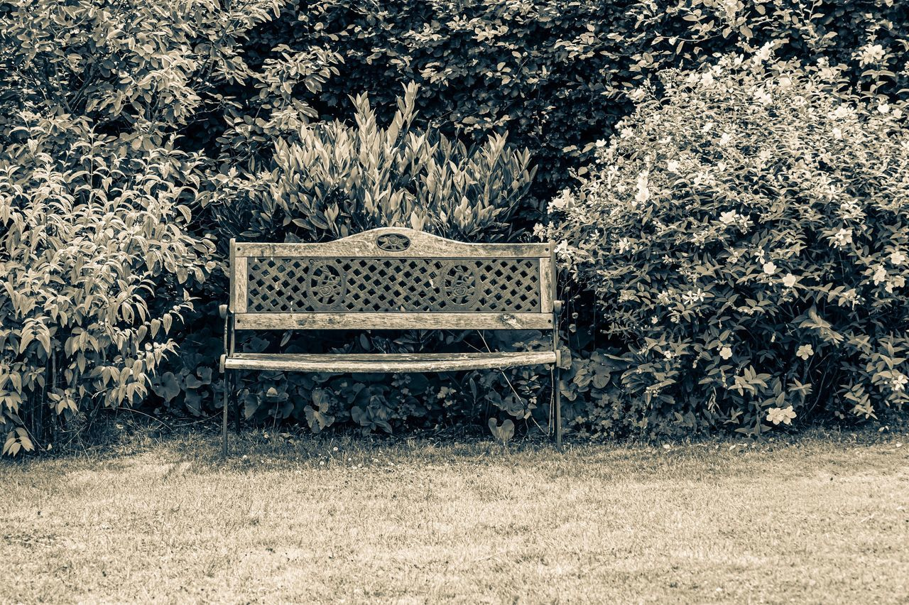 seat, bench, plant, empty, absence, park, tree, park bench, nature, park - man made space, no people, chair, growth, wood - material, day, relaxation, tranquility, grass, outdoors, beauty in nature