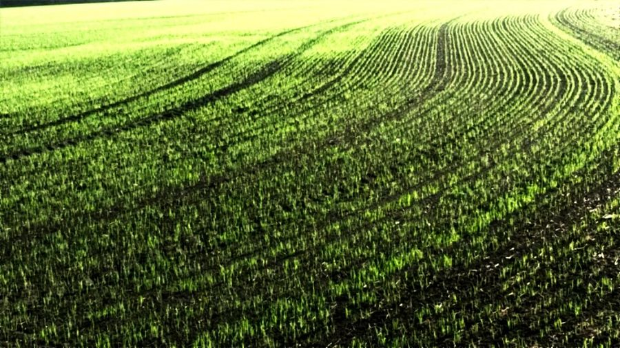 Farm Fields Agriculture Growth Field Farm Rural Scene Nature Crop  Cultivated Land Beauty In Nature Landscape Shapes In Nature  Outdoors Backgrounds Scenics No People Nature Is Beautiful Beauty In Detail Simple Beauty Growth