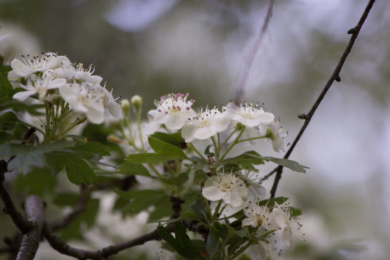 Sommergefühle Animal Themes Beauty In Nature Blooming Blossom Botany Branch Close-up Day Flower Flower Head Fragility Freshness Growth Leaf Nature No People One Animal Outdoors Petal Plant Springtime Summer Tree White Color