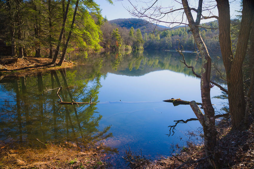 Appalachian Mountains Beauty In Nature Day Forest Idyllic Lake Land Nature No People Non-urban Scene Outdoors Plant Reflection Scenics - Nature Springtime Tranquil Scene Tranquility Tree Tree Trunk Trunk Water