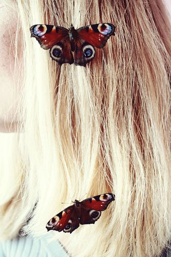 Hey friends!!! Thanks for watching this 🦋 Butterflies series 🦋 and I'm sorry that there are so many similar ones. This is my mom's hair, she didn't want me to photograph her face. In warm place these butterflies started to fly all over the room. Hope we could find the solution to help them. 😊😊 I wish you all a great weekend!! 🙋🏻✨🙌✨ Animal Themes Close-up No People Indoors  Day Haircolor Blond Hair Hair Unrecognizable Person People Butterfly - Insect Butterfly Collection European Peacock Peacock Butterfly Aglais Io European Peacock Butterfly