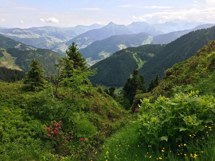 Alps Mountain Tree Nature Beauty In Nature Mountain Range Growth Outdoors Scenics Sky Landscape No People Lush Foliage Forest Day