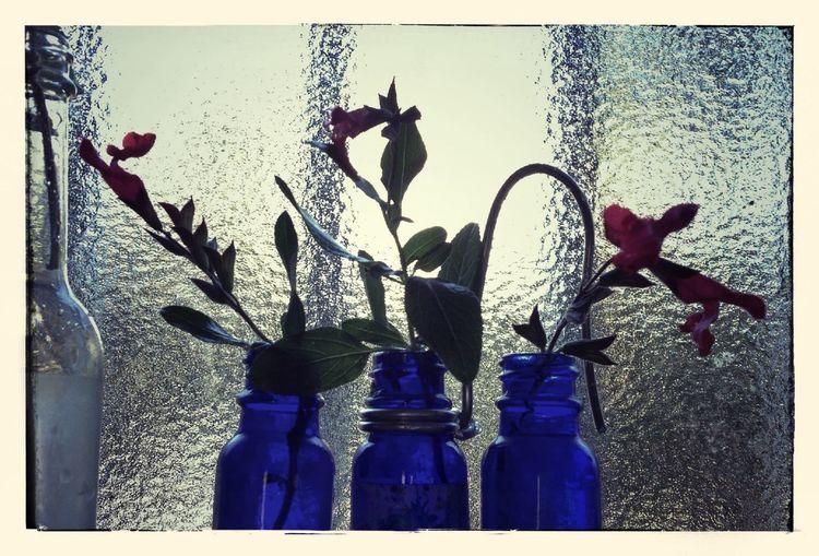 Cherry sage. Flowers EyeEm Nature Lover My Room