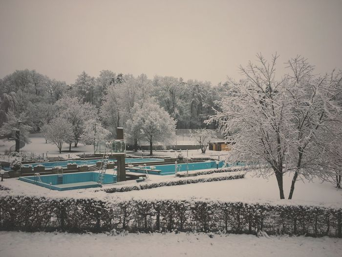 Trees by swimming pool against sky during winter