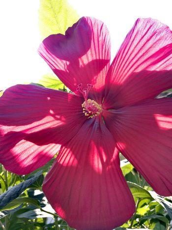 Flower Head Flower Petal Red Springtime Close-up Sky Plant