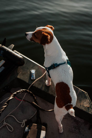 Dog in a boat