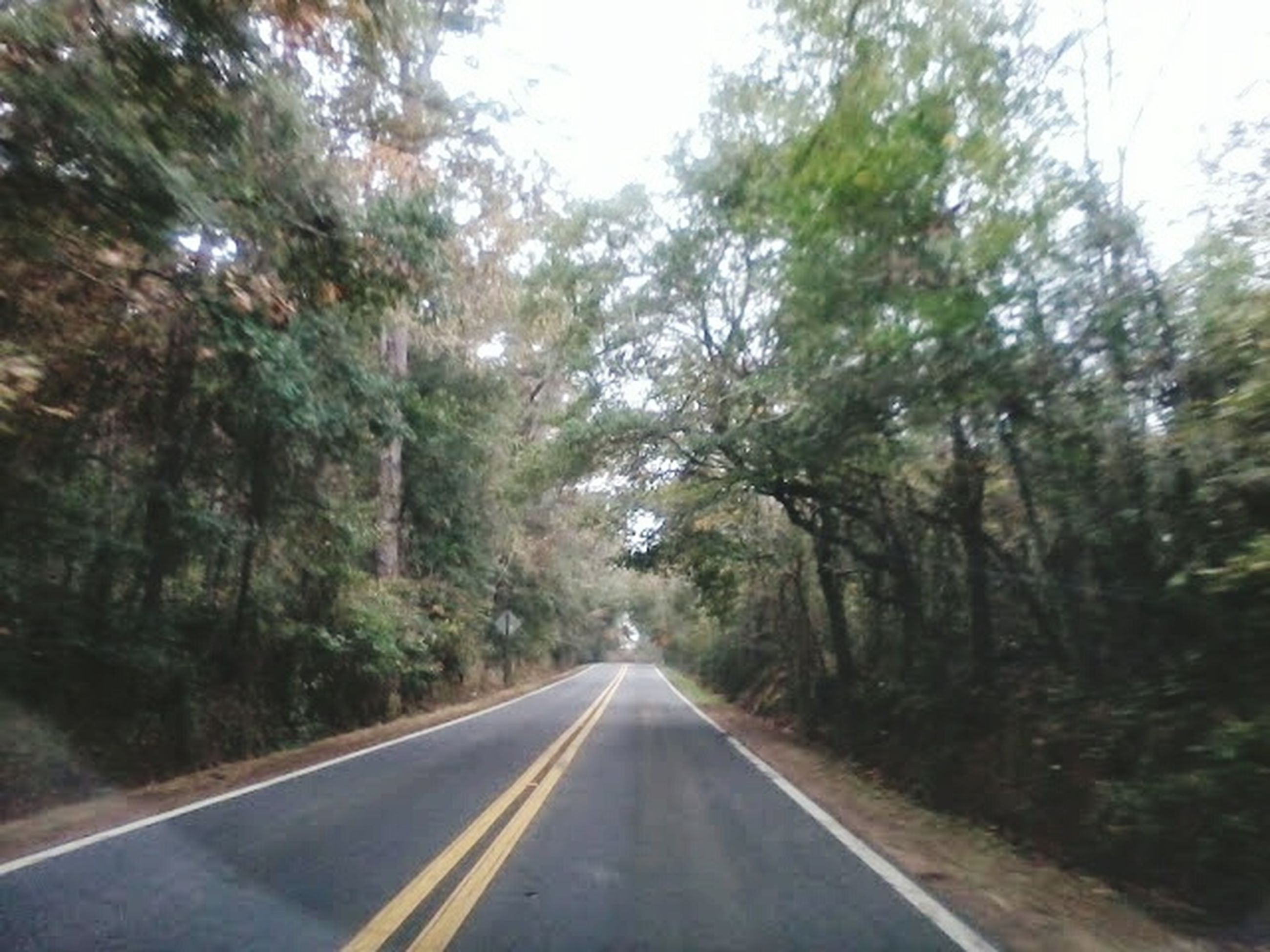 the way forward, tree, transportation, road, diminishing perspective, vanishing point, road marking, forest, country road, nature, growth, tranquility, empty road, day, asphalt, no people, outdoors, sky, long, street
