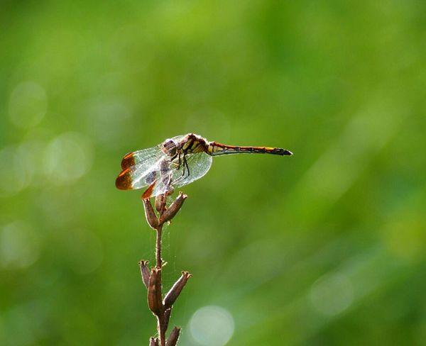 少し羽を休めて…また黄昏の空へ… トンボ Dragonfly 日だまり Nature Beauty In Nature Taking Photo From My Point Of View EyeEm Nature Lover EyeEm Best Shots