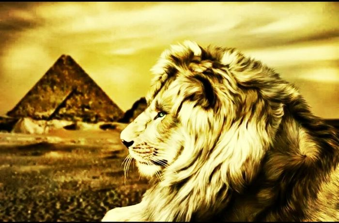 coo art for lion in pyramids.Egypt♥♡ Drawing!  Art Hello World Taking Photos