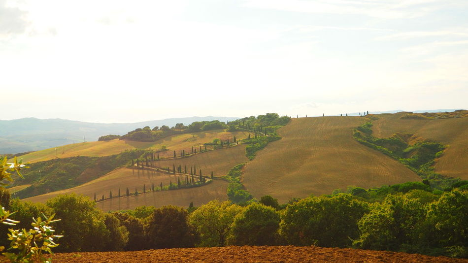 The most stunning view in Tuscany Alley Beauty In Nature Cupressus Nootkatensis Cypress Idyllic Landscape Outdoors Scenics Toscana Tranquil Scene Tuscany