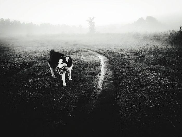 Mist Dog Husky Park Grass Grassy Togetherness Rural Scene Wet Sky