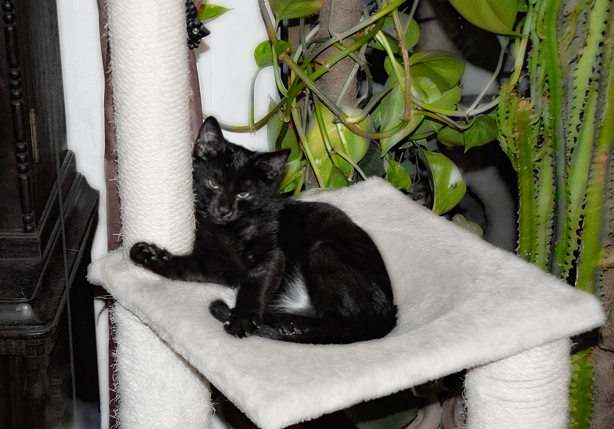 mammal, animal themes, cat, animal, domestic, feline, domestic animals, pets, domestic cat, one animal, vertebrate, relaxation, no people, sitting, looking at camera, plant, black color, portrait, sleeping, lying down, whisker