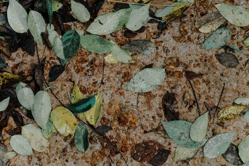 High angle view of leaves on stone wall
