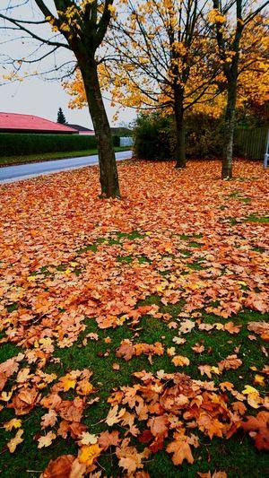 Beautiful Autumn Trees & Leafs
