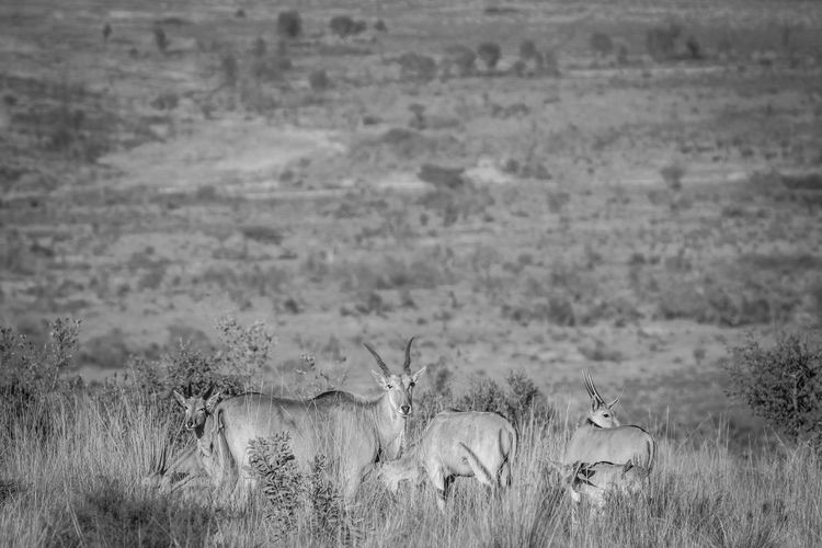 View of deer on field