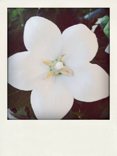 Plants 🌱 Flower ???
