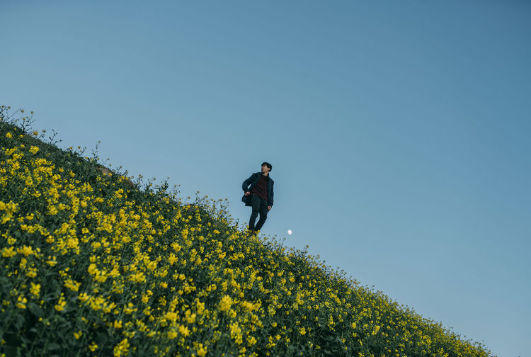 Man standing on yellow flowering plants against clear blue sky