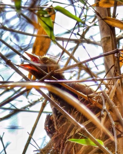 New England  Streamzoofamily Huffington Post Stories Wildlife Wildlife & Nature Outside Photography Rhode Island June 2016 Nature_collection Baby Birds Baby Birds In Nest EyeEm Nature Lover Bird Photography Beautiful Nature Birds Of EyeEm  Birds Bird