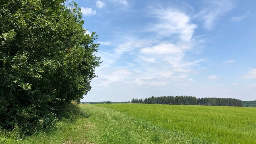Plant Sky Green Color Tree Growth Field Beauty In Nature Tranquility Landscape Land Tranquil Scene Cloud - Sky Environment Nature Scenics - Nature Grass Day Rural Scene No People Agriculture