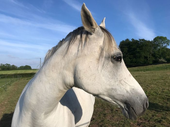 Close-up of horse on field against sky