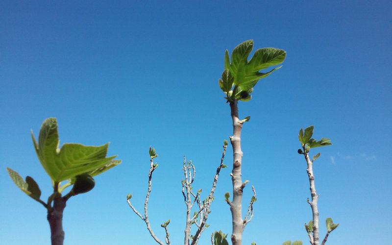 Low angle view of new leaves growing on plants