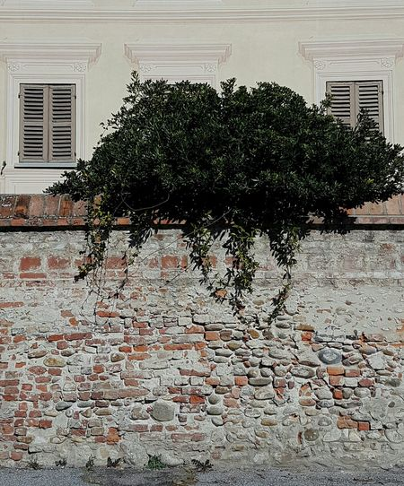 No People Day Outdoors Nature Plant On The Wall Old Wall Windows Old Architecture Old Building  Cherasco Langhe Piedmont Italy