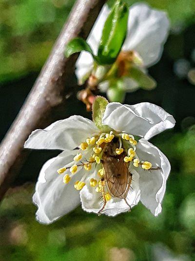 springtime 🐝