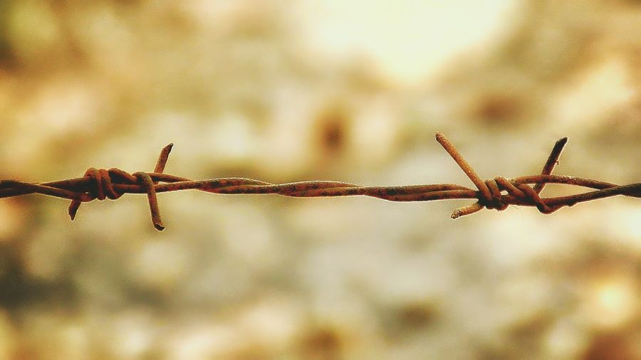 Getting Inspired Barbed Wire Minimalism Rust Rusty Popular Life Fence Keep Out Keep In