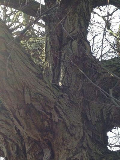 Trees TreePorn Treetastic Beautiful Bark