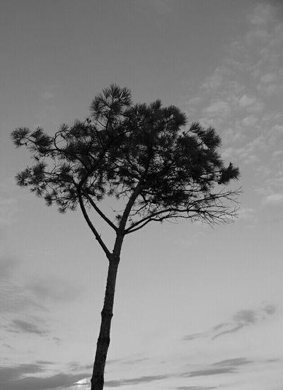 Silouhette Noir Et Blanc Shades Of Grey Eyemphotography Ciel Ambiance Nature Arbre