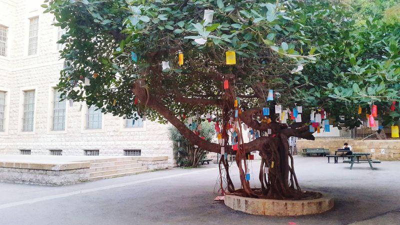 Life At It's Best Wish Tree Wish Make A Wish Write It All Down