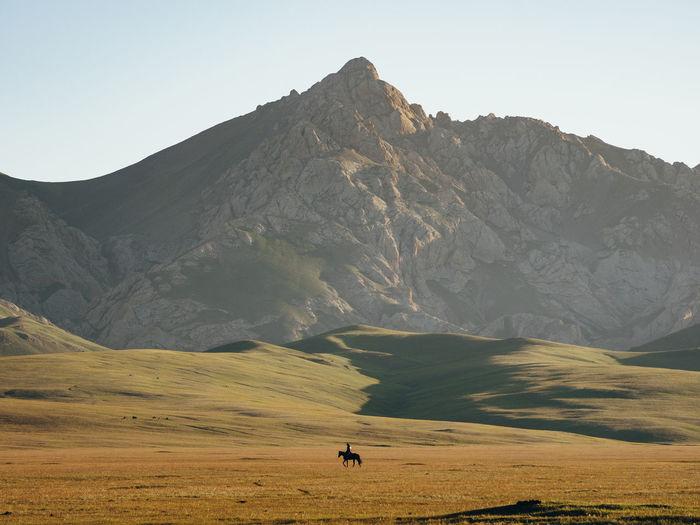 A lone shepherd