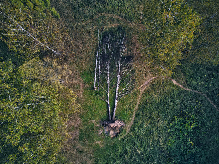 High angle view of trees on field in forest