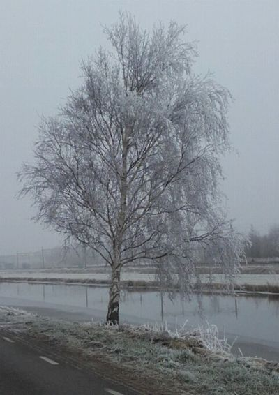 Tree Water Willow Tree Snowing Idyllic Beauty In Nature