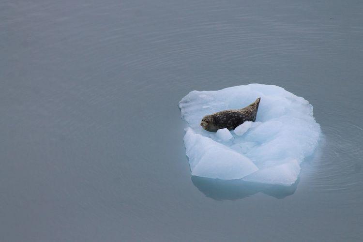 High angle view of seal on iceberg at sea