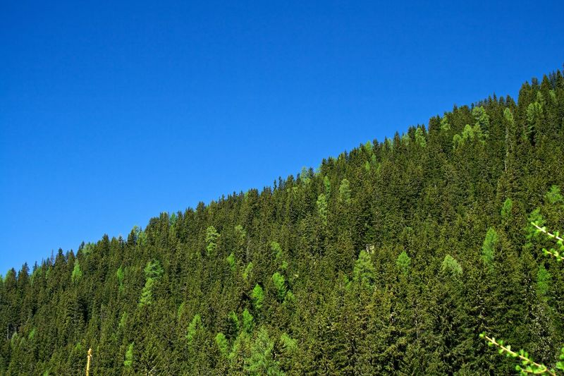 Trees diagonal