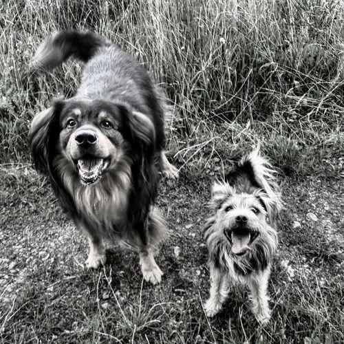 Dogoftheday Dogs Dog❤ Mydogsarecoolerthanyourkids Mydogs Taking Photos Cheese! Relaxing Enjoying Life Black&white Blackandwhite Photography Black & White Blackandwhite Bwigers Samsungphotography Igers Iggermany